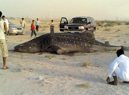 اسماك القرش المفترس