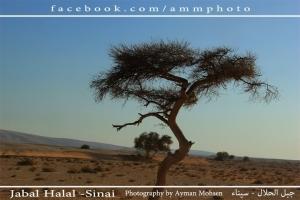 طبيعة | الطريق الى جبل الحلال كاميرا المبدع ايمن محسن