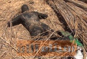 جثث المسلحون متفحمه فى شمال سيناء
